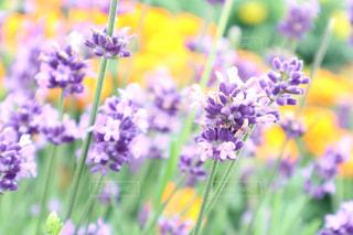 花の写真・画像素材[623658]