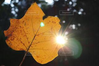 秋の写真・画像素材[624799]