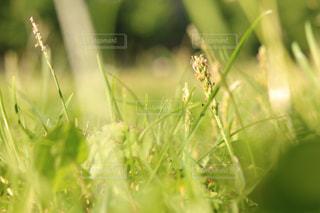 自然の写真・画像素材[623664]