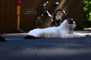 猫の写真・画像素材[623665]