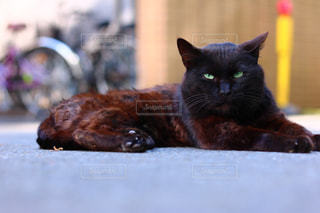 猫の写真・画像素材[623666]