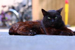 猫の写真・画像素材[623668]
