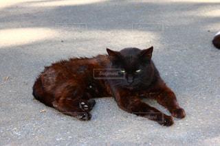 猫の写真・画像素材[623670]