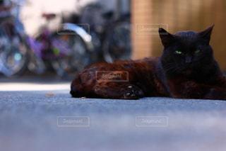 猫の写真・画像素材[623672]