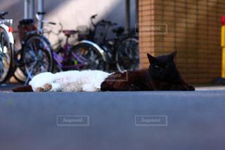猫の写真・画像素材[623673]