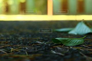自然の写真・画像素材[623769]