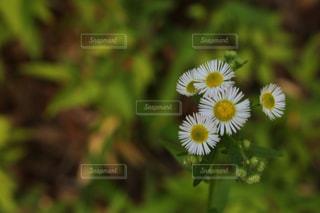 自然の写真・画像素材[626097]