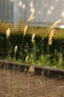 自然の写真・画像素材[626103]
