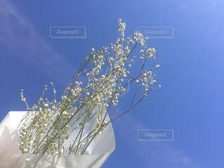 花の写真・画像素材[651092]