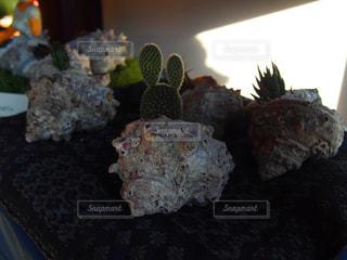 貝の写真・画像素材[654503]