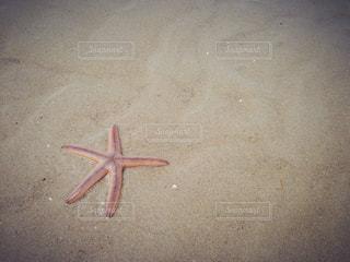 海の写真・画像素材[656832]