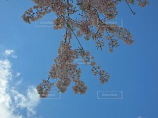 木の上を飛ぶ鳥の群れの写真・画像素材[1120504]