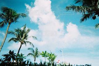 ヤシの木の写真・画像素材[2189196]