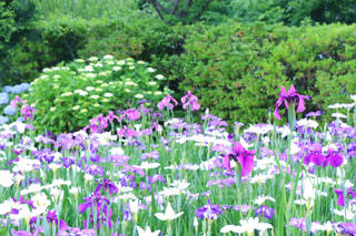 大きな紫色の花が庭にあるの写真・画像素材[2189201]
