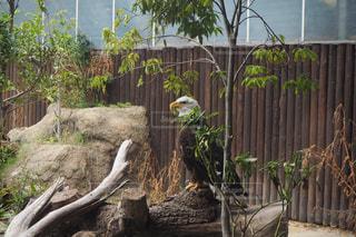 動物園の囲いの中のキリンの写真・画像素材[2417891]