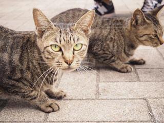 地面に座っている猫の写真・画像素材[2428518]