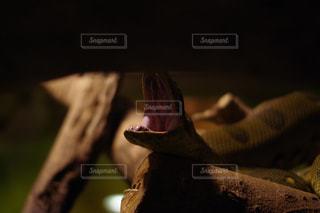 ヘビの写真・画像素材[762016]