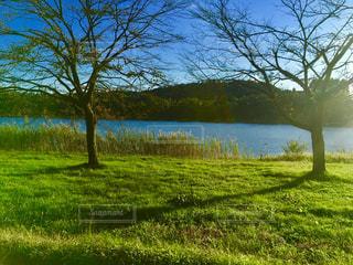 水の体の横に緑豊かな緑のフィールド - No.967299