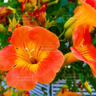 カラフルな花の植物の写真・画像素材[1312983]