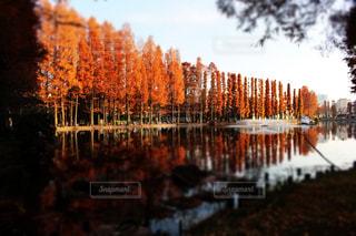 秋の写真・画像素材[625676]