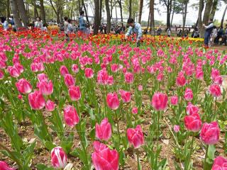 花の写真・画像素材[624330]