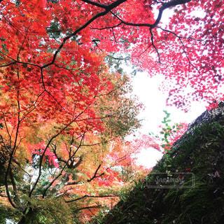 秋の写真・画像素材[628205]