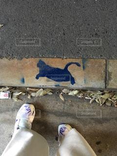 猫の写真・画像素材[629747]