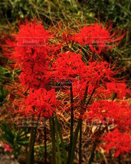 近くの花のアップの写真・画像素材[766620]