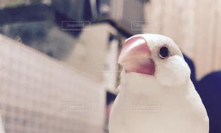 No.626623 鳥