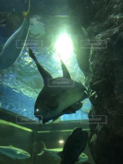 水族館の写真・画像素材[624366]