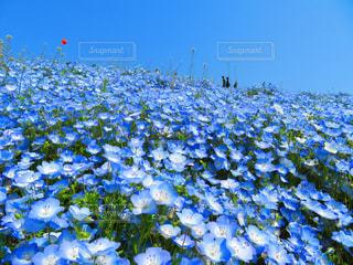 花の写真・画像素材[624898]