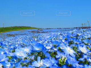 花の写真・画像素材[624903]