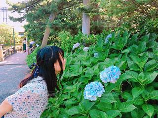 花 - No.635814