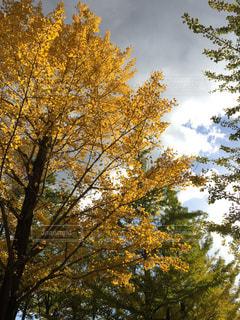秋の写真・画像素材[633648]