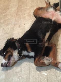 犬 - No.626829