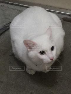 猫 - No.627128