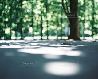 自然の写真・画像素材[270612]