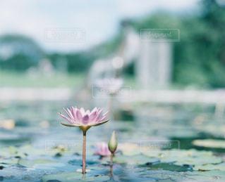 自然の写真・画像素材[270899]