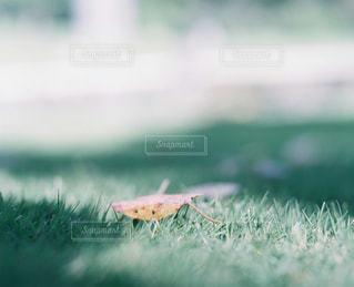 自然の写真・画像素材[270901]