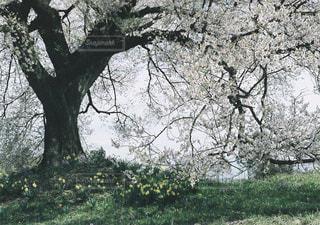 自然の写真・画像素材[270904]