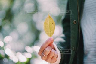 自然の写真・画像素材[273240]