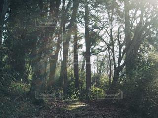 森林 - No.306844