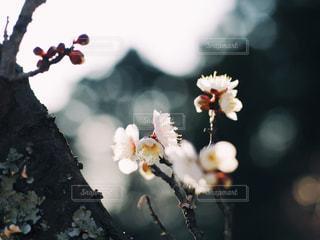 花の写真・画像素材[321465]