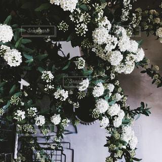 花の写真・画像素材[334005]