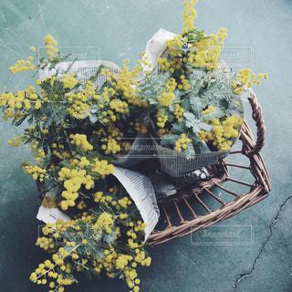 花の写真・画像素材[354791]