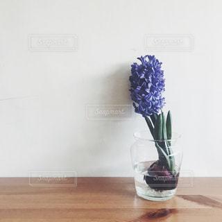 花の写真・画像素材[372747]