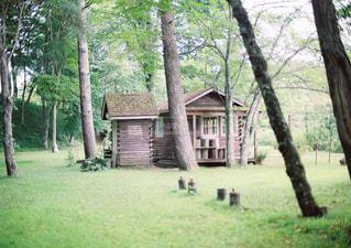 森の写真・画像素材[380212]