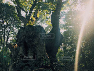 神社 - No.621994