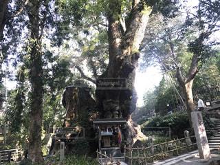神社の写真・画像素材[621997]