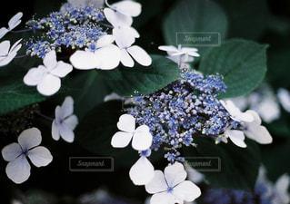 花の写真・画像素材[640817]